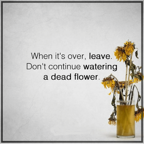 Move On Instead Of watering dead flowers