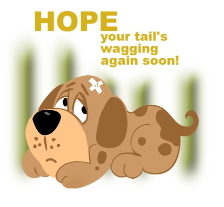 get well soon messages for a pets